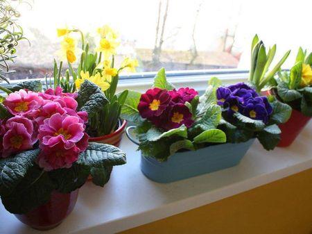komnatnye-cvety-dlya-kuxni_6