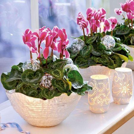 komnatnye-cvety-dlya-kuxni_9